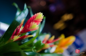 Flower photography with gadgets